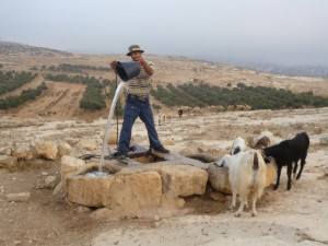 Shepherd gets the water from the cistern. Olive trees behind. (1024x768)